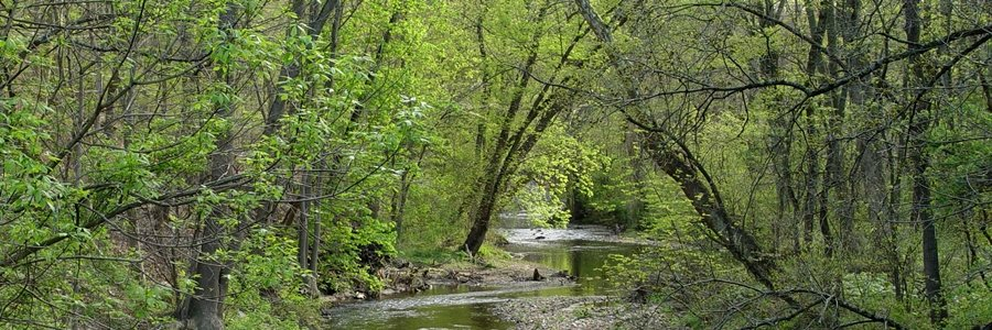 Red Clay Creek - Rick Darke 900x300