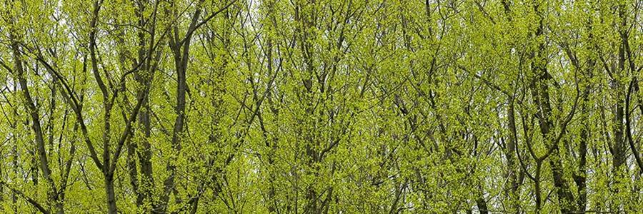 woodland in spring 900x300