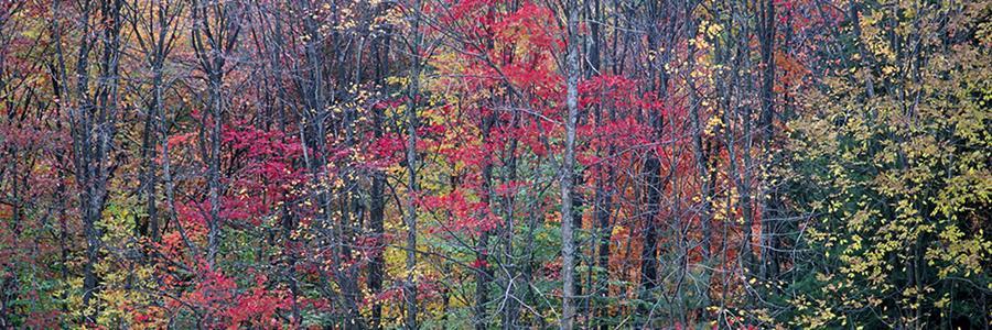 Mixed woodland in autumn - Copyright Mark Gormel 900x300
